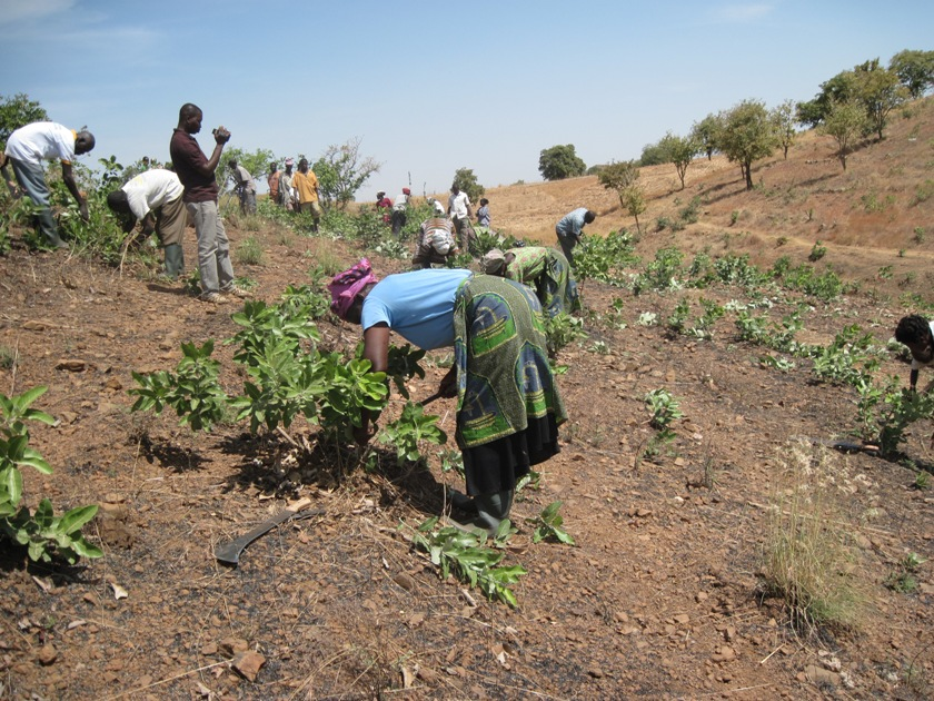 Local farmers implementing FMNR techniques in Yameriga, Talensi District